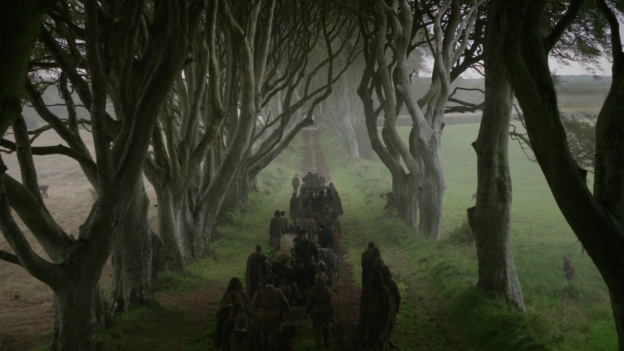 kuzey irlanda the dark hedges