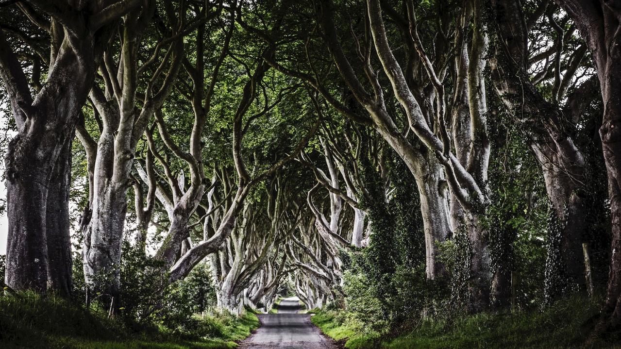 avrupa rüyası kuzey irlanda the dark hedges