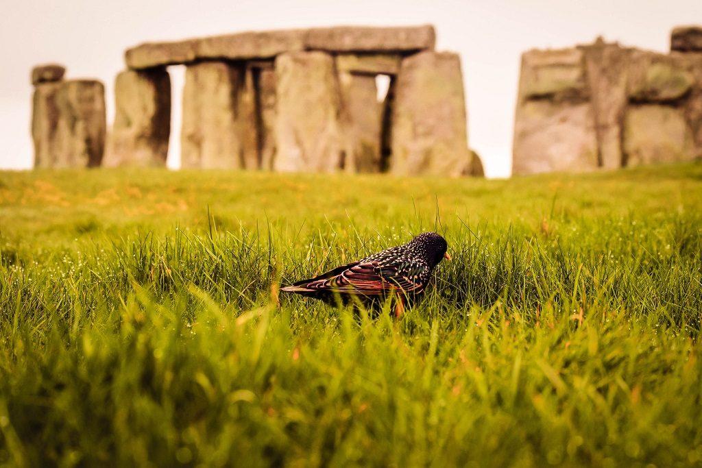 stonehenge-gezilecek-yerler